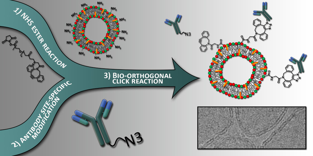 A bio-orthogonal functionalization strategy for site-specific coupling of antibodies on vesicle surfaces after self-assembly